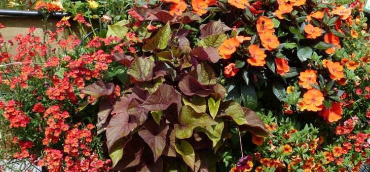 Ab 08.04.19 Balkonkästen vorpflanzen