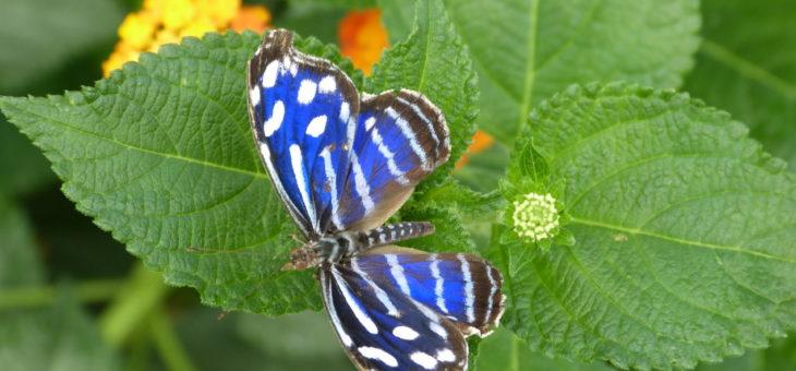Schmetterlingshaus – tropische Schmetterlinge hautnah