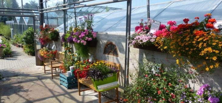 ab 14.04.: Balkonkästen vorpflanzen