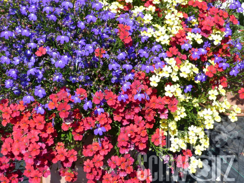 Blumen Schwarz März 2017