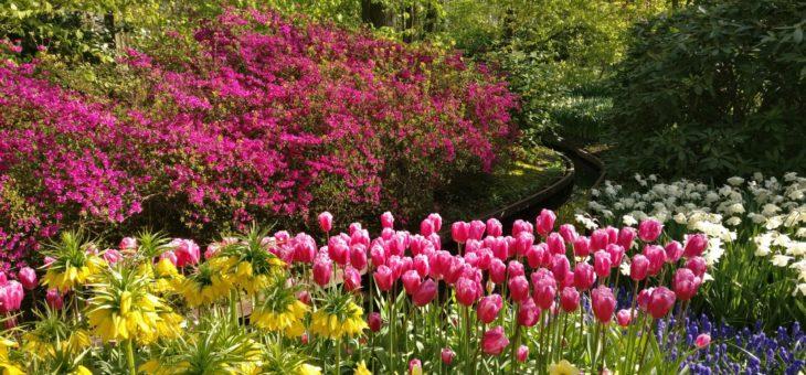 Frühling pflanzen