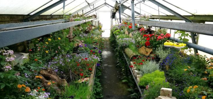fällt leider aus: Schmetterlingshaus in Schwabach ab 06.07.2020