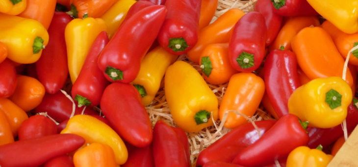 Gemüse-Probiertage – wie schmecken die Sorten?