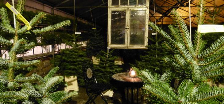 Weihnachtsbäume aus Franken