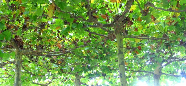 natürlicher Schatten im Garten: Bäume und Kletterpflanzen