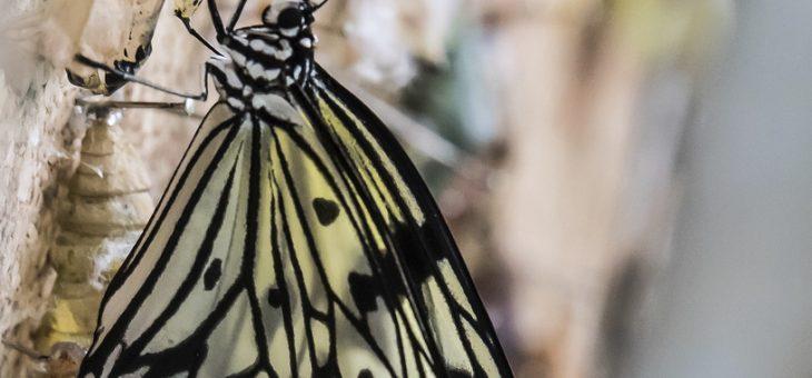 Siegerbild Schmetterlingswettbewerb