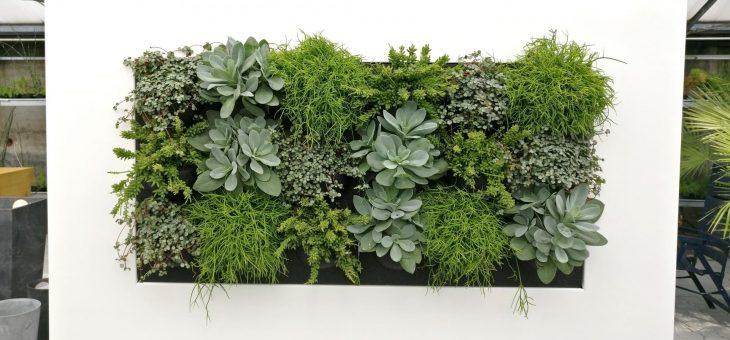 lebende Bilder – Pflanzen als Lifestyle