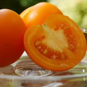 Gelbe Tomate 'Bolzano'  –  Veredelt