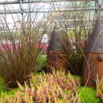 Carex petriei - Fuchssegge