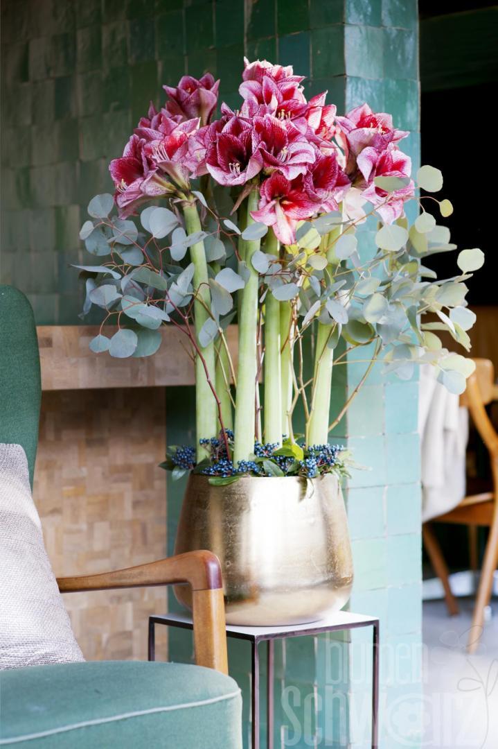 neues vom ritterstern der amaryllis blumen schwarz. Black Bedroom Furniture Sets. Home Design Ideas