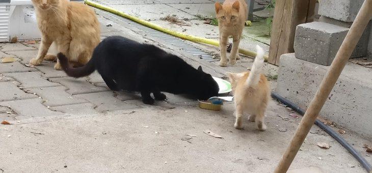 Rutzendorf: Familie und Katzen