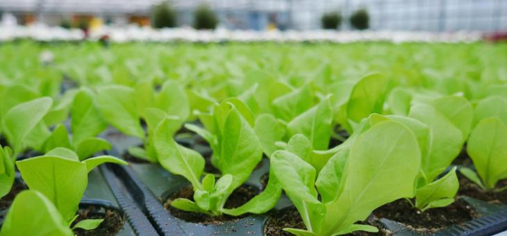 Frühling: Vielseitige Rohkost und Salat direkt aus dem eigenen Garten