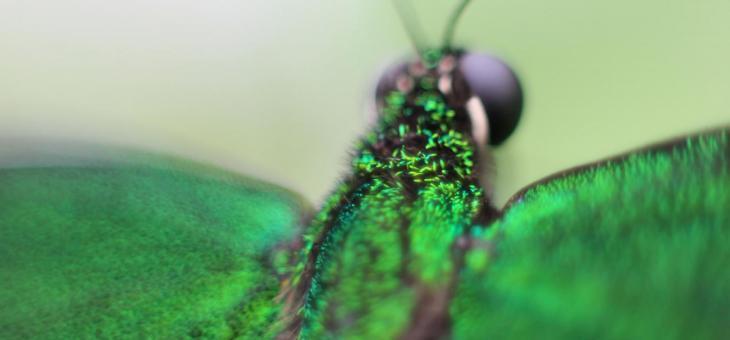 Schmetterlingshaus um eine Woche verlängert