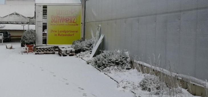 Adventsausstellung: Sternenlicht und Tannendurft (Rutzendorf)