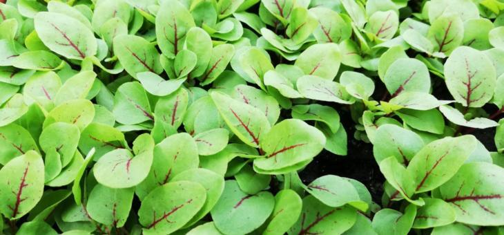 Wintergemüse – Ernte bis in die Kälte