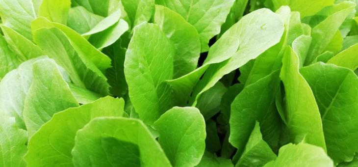Gemüsepflanzplaner