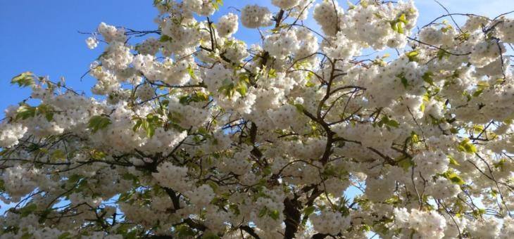08.02.19 Kurs: Obstbaumschnitt