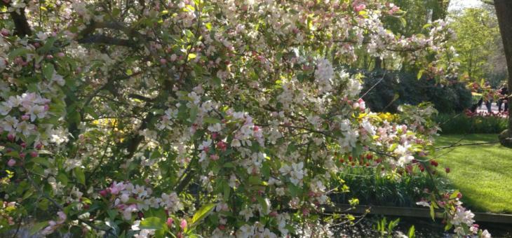 08.02.19 Kurs: Obstbaumschnitt für Frauen