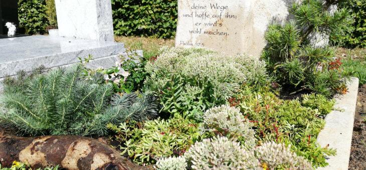 Pflanzen für trockene Gräber