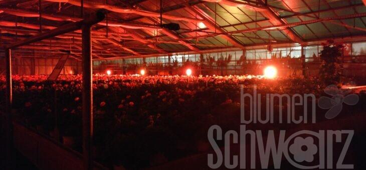 fällt leider aus: Nacht der Lichter in Schwabach 25.04.2020