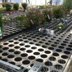 kaum noch Frühlingspflanzen im Betrieb