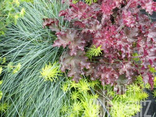 Spätsommer- und Herbstpflanzen